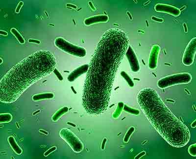 Schematische Darstellung des Bakterienstamms B. bifidum MIMBb75, der die Reizdarm-Symptome signifikant lindern kann