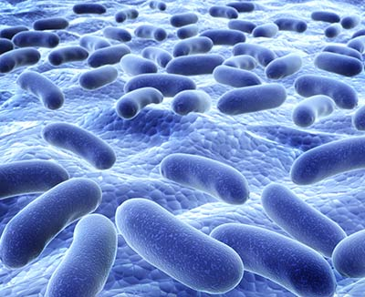 Spezielle Bifidobakterien heften sich an die Darmwand und stärken die Darmbarriere bei Reizdarm