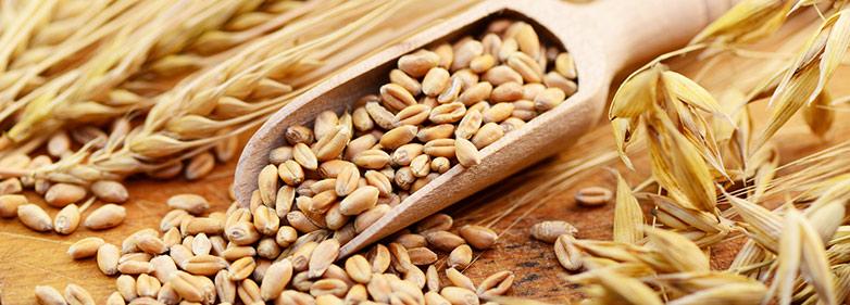 Getreidekörner – Verursacher der Zöliakie-Symptome