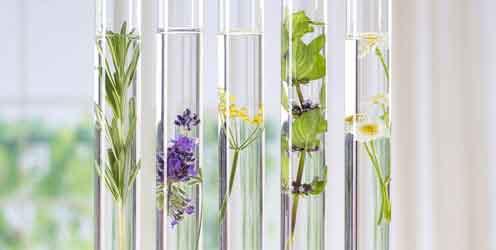 Natürliche Abführmittel – Reagenzgläser mit Kräutern und Blüten