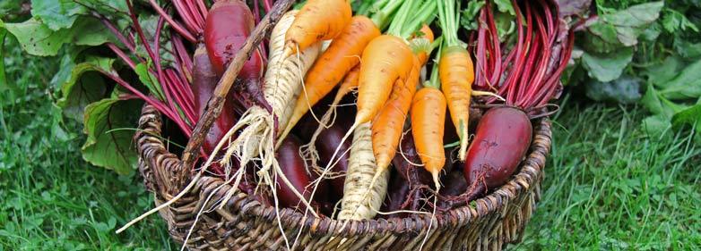 Wurzelgemüse - ballaststoffreiche Lebensmittel